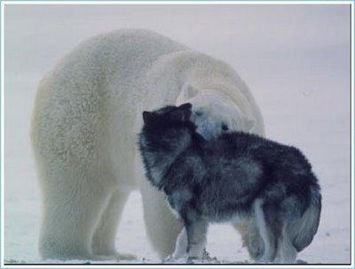 Polar4_2