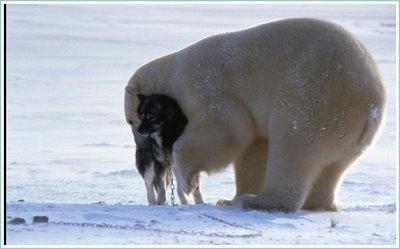 Polar5