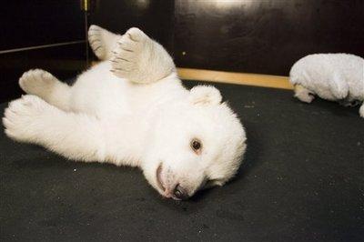 Bear_01_3