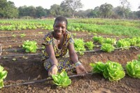 Woman_cabbage_field