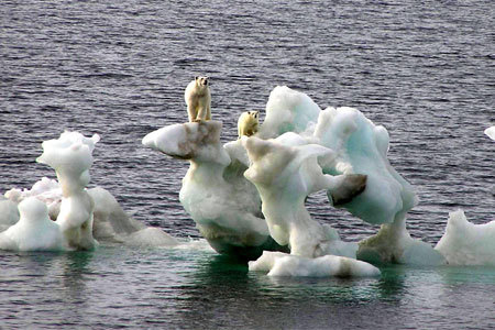 Stranded_polar_bears