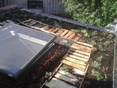 Roof_garden_5