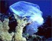 Plastic_bags_look_like_jelly_fish