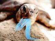 Turtle_ingests_a_plastic_bag