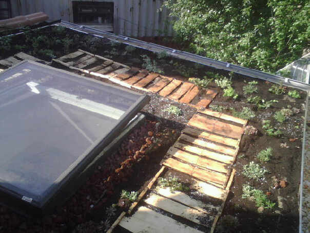 No Impact Man: Urban rooftop farming will save the world